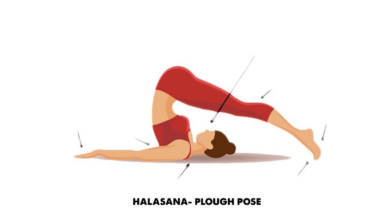 Halasana- Plough pose